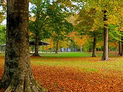 Hartshill Hayes Country Park